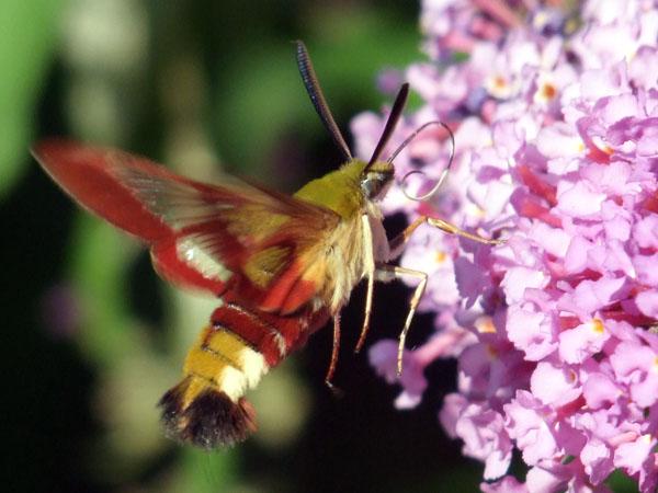insecte-inconnu